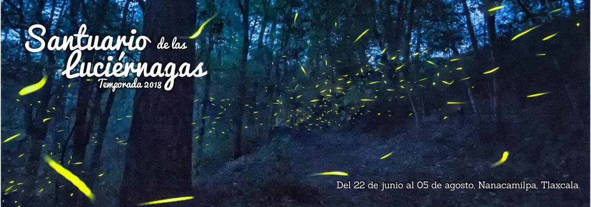 Santuario de las luci rnagas en tlaxcala temporada 2018 Espectaculo de luciernagas en tlaxcala